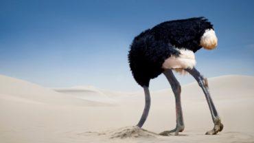 Een struisvogel steekt de kop in het zand.